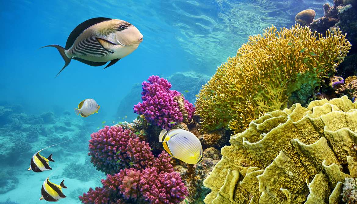 Underwater ecosystem scene with coral reef and fish