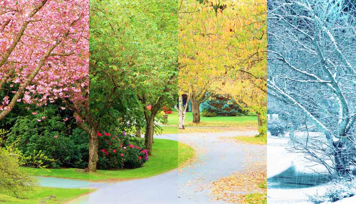 trees during all four seasons