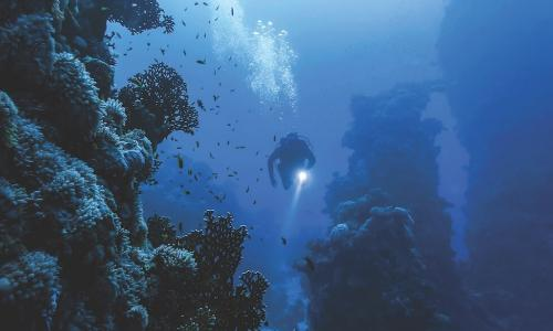 Deep sea diver shining a light at coral formations