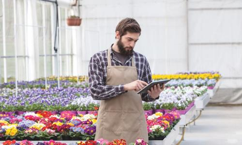 business owner using tablet in greenhouse