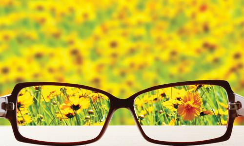looking through prescription glasses at field of yellow flowers
