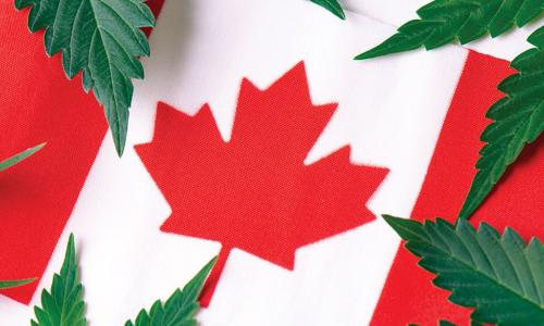 cannabis leaves over Canadian flag