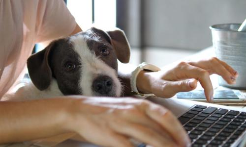 female hands working on laptop with dog